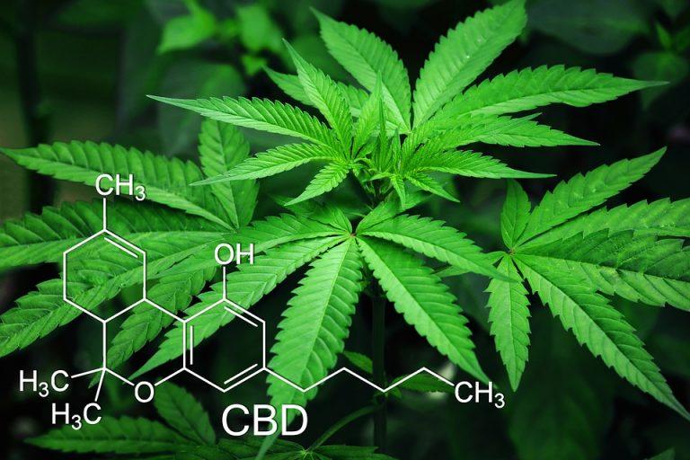 Convegno sulla cannabis medica con McGill University