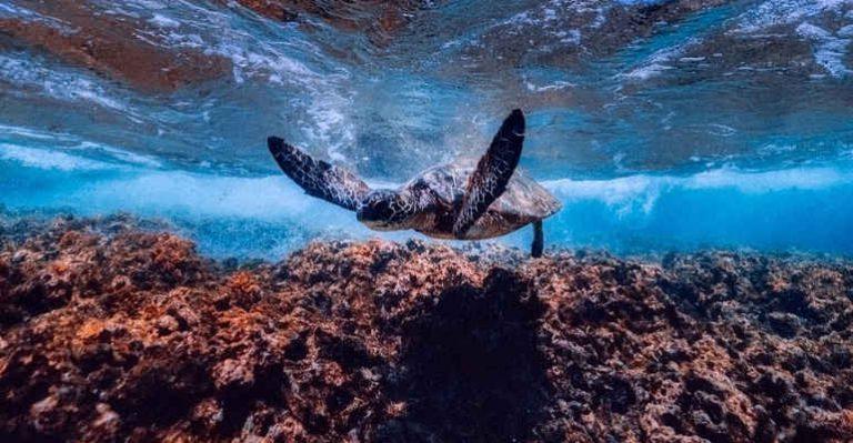 Partenariato Sicilia-Malta per la tutela delle aree marine protette