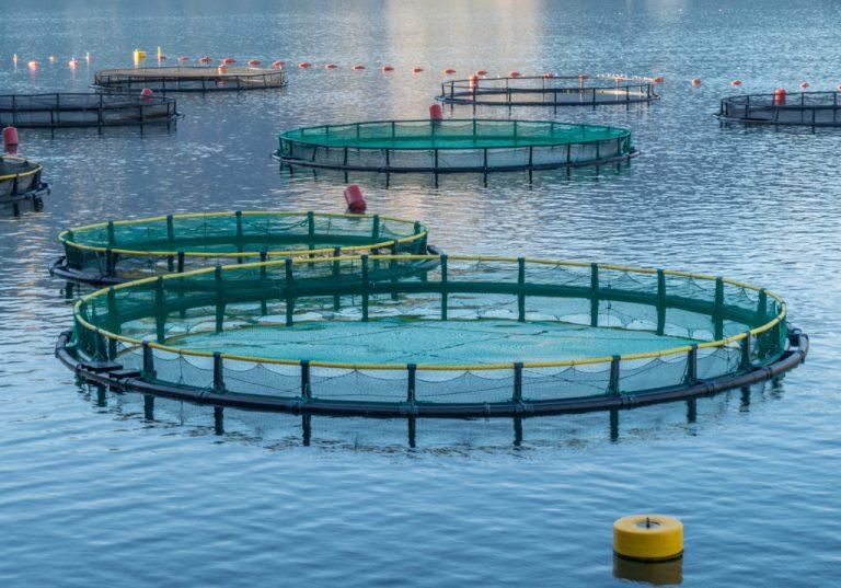 Ricerca e sviluppo a Malta: il successo dell'Acquacoltura 4.0