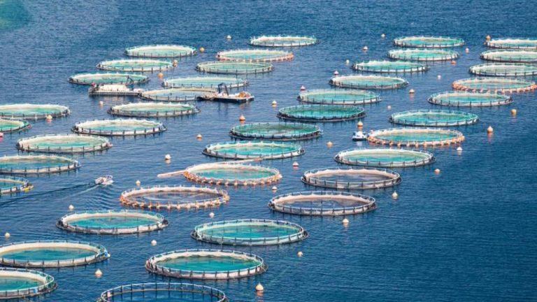 Acquacoltura e turismo balneare: la sfida della digitalizzazione